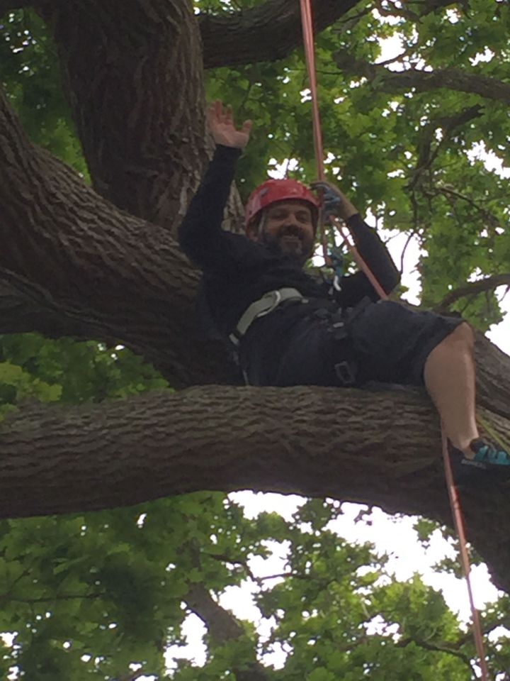 Tree Climbing on the Isle of Wight